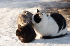 Three cats sits on a snow Stock Photos