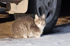 Cat under the car Stock Photos