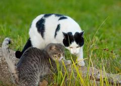 Cats friendship Stock Photos