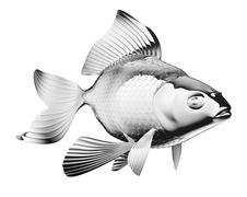 Chromium-plated goldfish isolated Stock Illustration