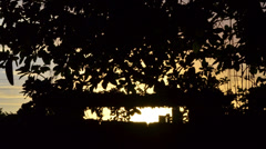 sunset on the back yard - stock footage