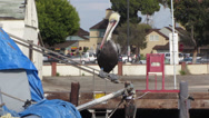 Stock Video Footage of California Brown Pelican