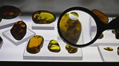 Amber stones Stock Footage