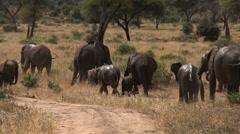 Elephants leave a mud bath Stock Footage