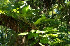 Big leafy plant on tree Stock Photos