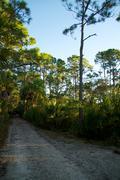 empty dirt road in florida - stock photo