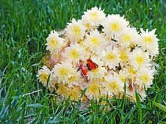 bouquet from yellow asters with butterfly on green grass. - stock photo