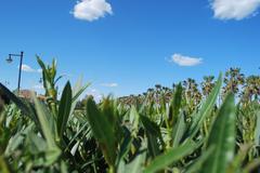 Grass View at a Valencia, Spain Beach - stock photo