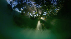 Light rays shining through mangroves dreamy underwater scene Stock Footage