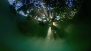 Stock Video Footage of Light rays shining through mangroves dreamy underwater scene
