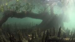 Mangroves atmospheric underwater view in Bunaken Island, Sulawesi Stock Footage