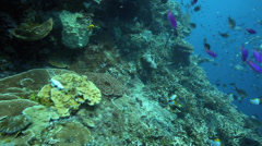 Coral reef wall alive with fish - stock footage