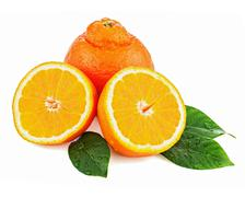 fresh orange fruit with green leaves isolated on white background. - stock photo