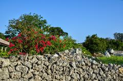 Stock Photo of red flowers at old stonewall