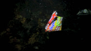 Stock Video Footage of Plastic food wrapper floating underwater at night
