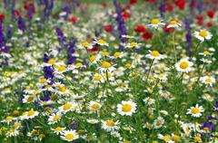 Stock Photo of meadow with wild flowers spring season