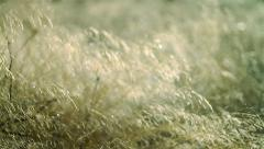 Forest detail, beautiful abstract texture of grass Stock Footage