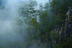 Hazy forest valley Stock Photos