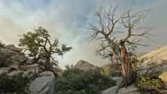 Wicked juniper tree wilderness landscape Pan 2 Stock Footage