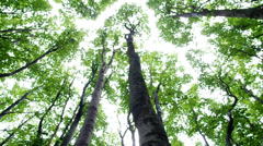 Beech forest Stock Footage