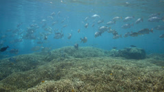 Tropical coral reef alive with schools of fish Stock Footage