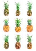Stock Illustration of Pineapple