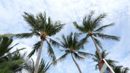 Stock Video Footage of Palm trees sky tropical island