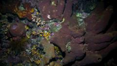 Coral reef biodiversity at night - stock footage