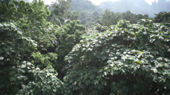 View of rainforest in Malaysia Stock Footage