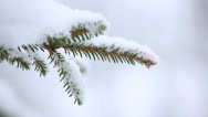 Stock Video Footage of Evergreen branch close up covered with snow