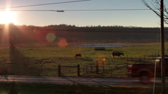 Horses near sunset / Snow Geese in distance Stock Footage