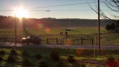 Horses at Sunset / Birds / Tree Farm - stock footage