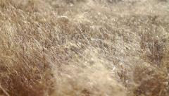 Forest detail, beautiful abstract texture of dry grass Stock Footage