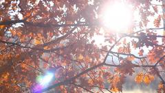 Dolly shot over oak twigs with sunbeams breaking through - stock footage