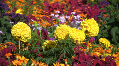 Flowerbed Stock Footage