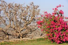 Monsoon palace garden, udaipur, india Stock Photos