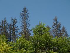 forest regeneration - stock photo