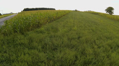 Aerial of cornfield close the road - stock footage