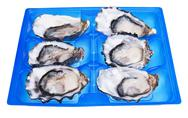 Stock Photo of half a dozen oysters