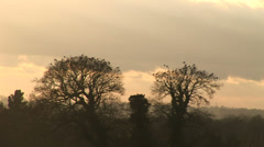 sunset and trees in the evening in winter England - stock footage