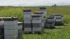 Honey bee hives Stock Footage