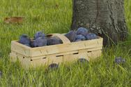 Stock Photo of plums