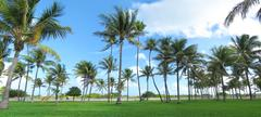 Panorama of palm trees at Miami Beach Stock Photos