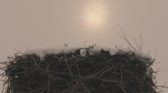 Low angle mid shot of crane bird nest in winter Stock Footage