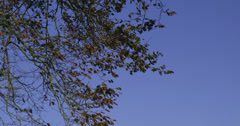 Branches contrasting against clear blue sky - stock footage