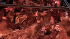 Caged chickens at market Stock Footage