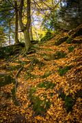 fallen leaves on a steep hillside on a trail in gunpowder falls state park, m - stock photo