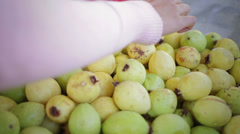 Picking fruit Stock Footage