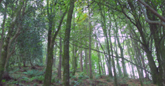 Secluded wooded area Stock Footage