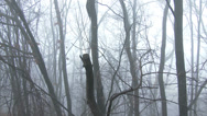 Stock Video Footage of 4K Super Scary Winter Foggy Forest 1 pan